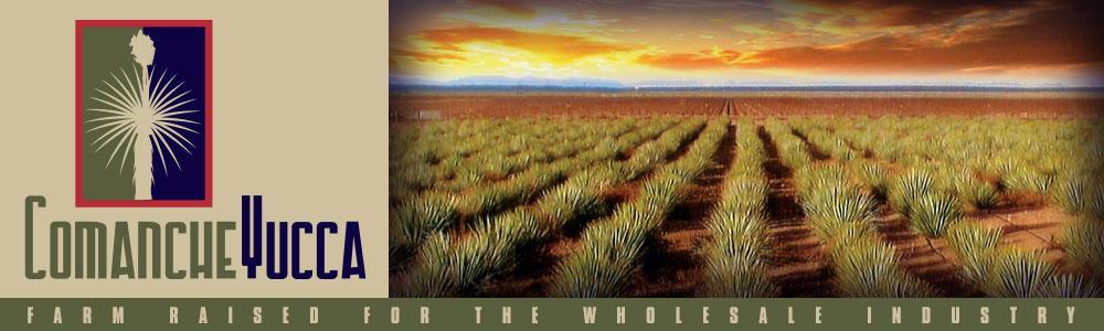 Comanche Yucca
